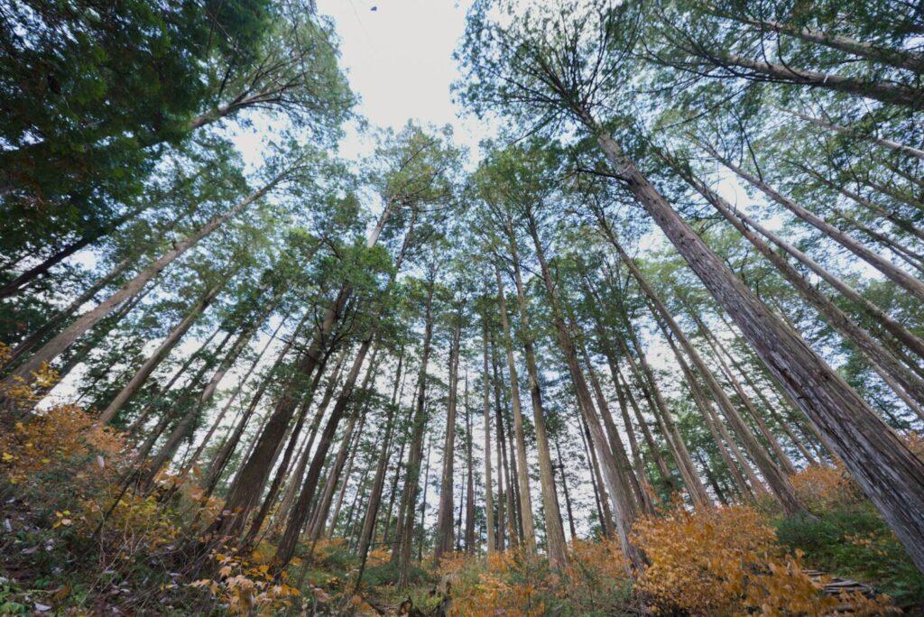 木育の大切さを知ろう
